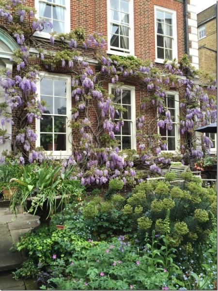 The-Masters-Garden-EC4-wisteria-©-Open-Garden-Squares-Weekend_thumb