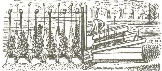 dunbar gardening